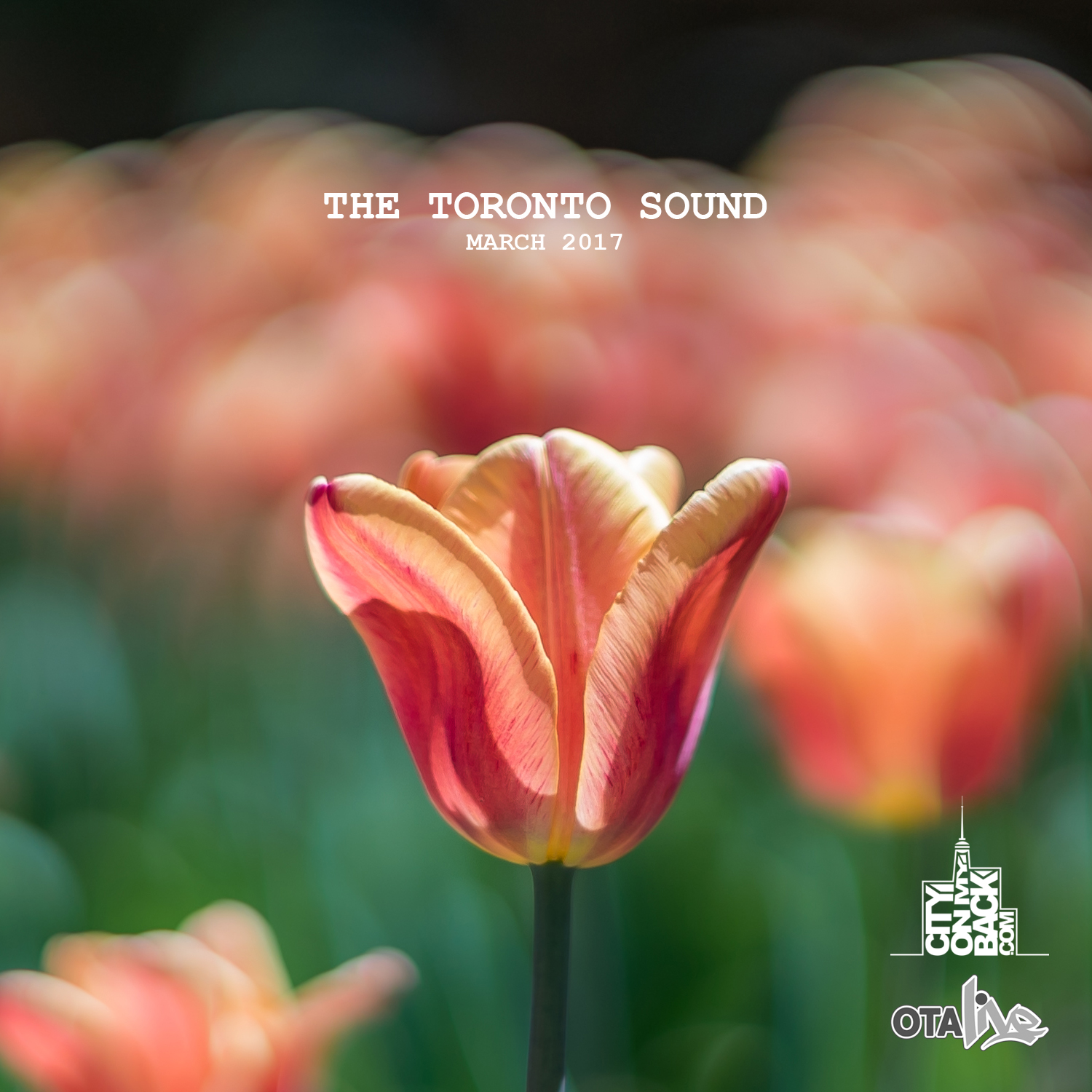The-Toronto-Sound---2017-March